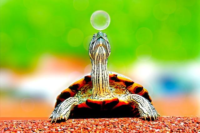 『変わりたいなら、兎でなく亀の歩みが必要だ。』